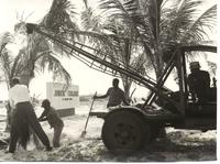 Here, landscape workers plant coconut palms at the east entrance of the campus