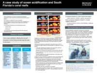 A case study of ocean acidification and South Florida's coral reefs.
